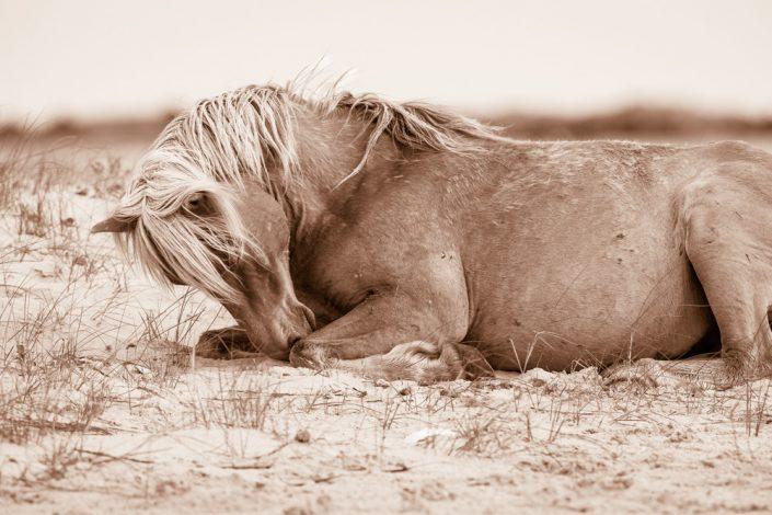 Lisa Cueman's Dreamland, Sepia Fine Art Horse Photography