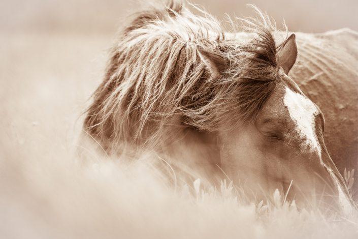 Lisa Cueman's Field of Dreams, Sepia Fine Art Horse Photography