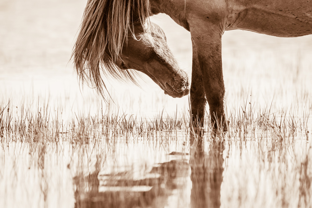 Lisa Cueman's Reflected Grace, Sepia Fine Art Horse Photography