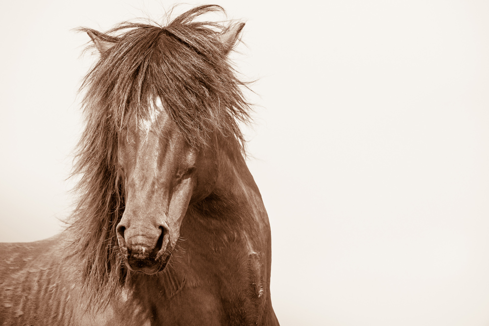 Lisa Cueman's Rock Star, Sepia Fine Art Horse Photography