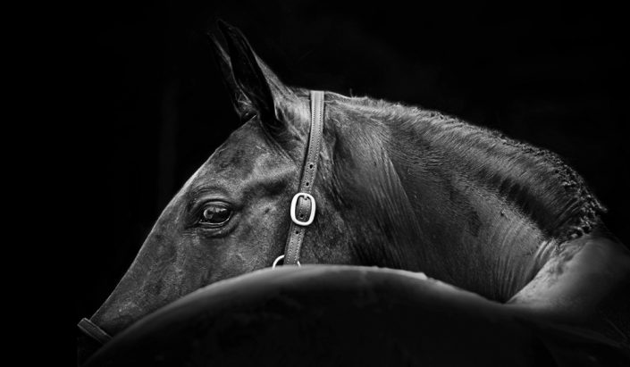 Lisa Cueman's At A Glance, Black and White Fine Art Horse Photography