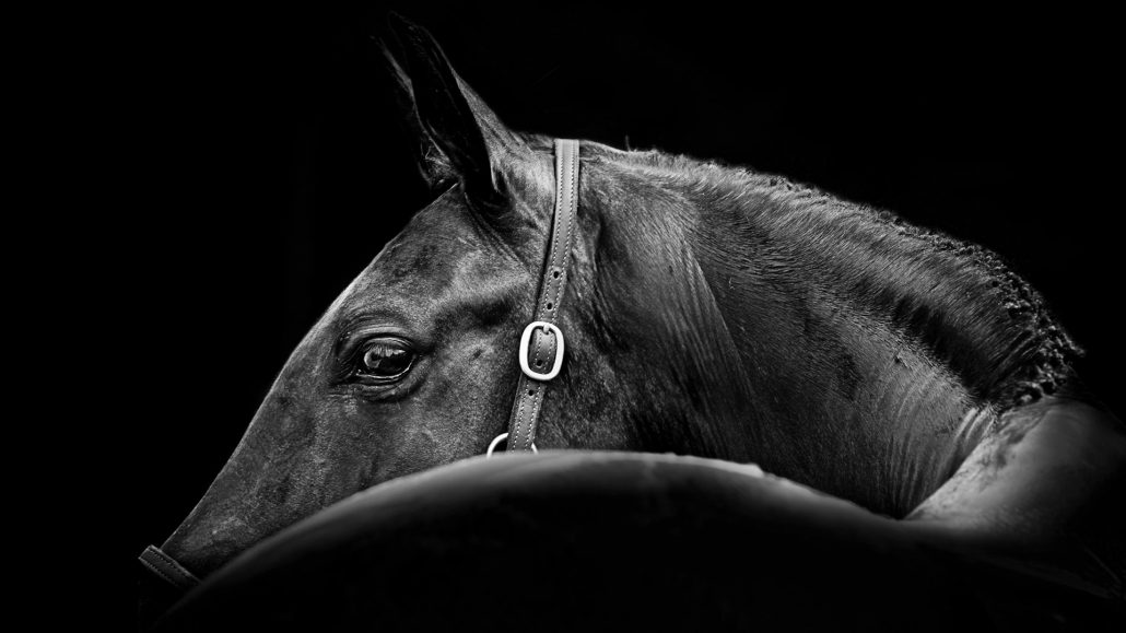 Lisa cuemans at a glance black and white fine art horse photography