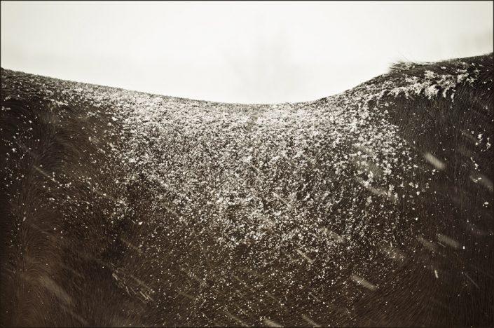 Lisa Cueman's Backscape, Sepia Fine Art Horse Photography