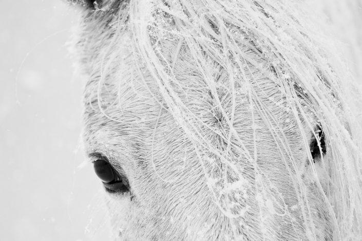 Lisa Cueman's Black Eyes, Black and White Fine Art Horse Photography