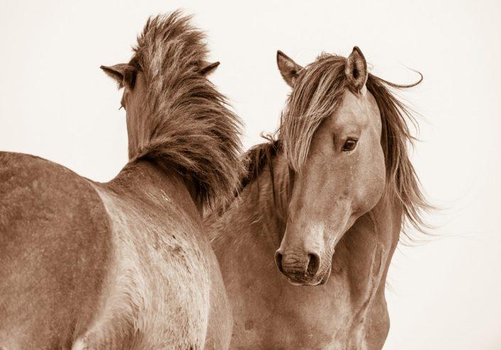 Lisa Cueman's Exchanges, Sepia Fine Art Horse Photography