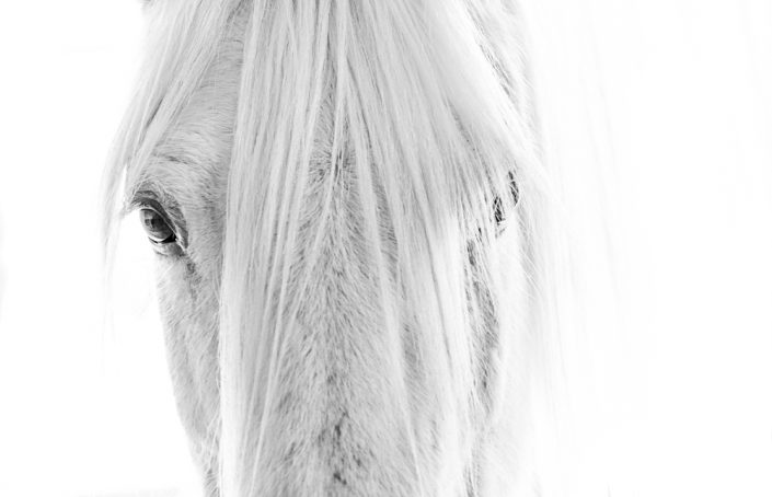 Lisa Cueman's Eye to Eye, Black and White Fine Art Horse Photography