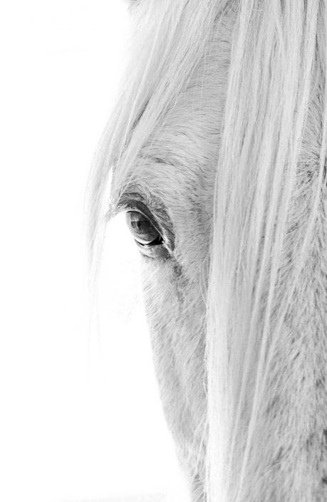 Lisa Cueman's Eye to Eye Panel Left, Black and White Fine Art Horse Photography