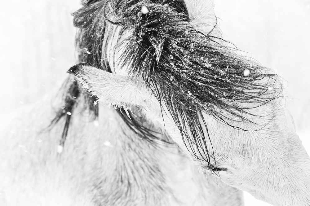 Lisa Cueman's Head Dance, Black and White Fine Art Horse Photography