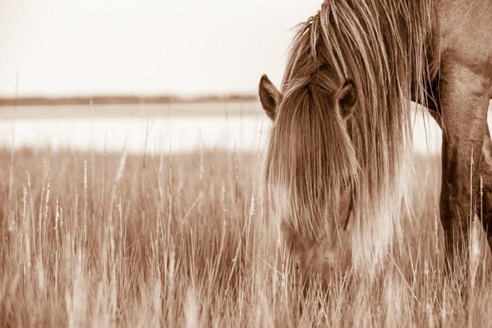 Lisa Cueman's Island Grazer, Sepia Fine Art Horse Photography