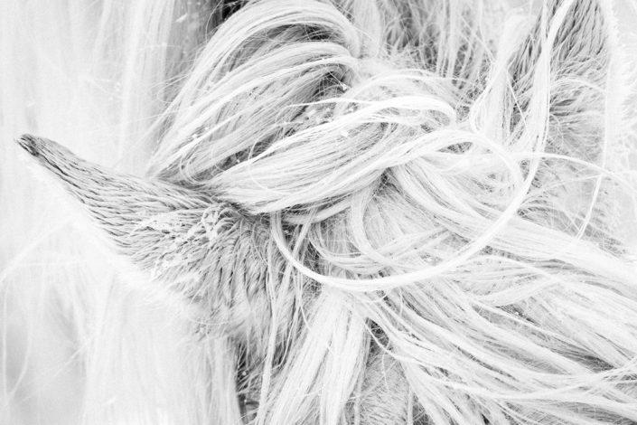 Lisa Cueman's Mane Texture, Black and White Fine Art Horse Photography