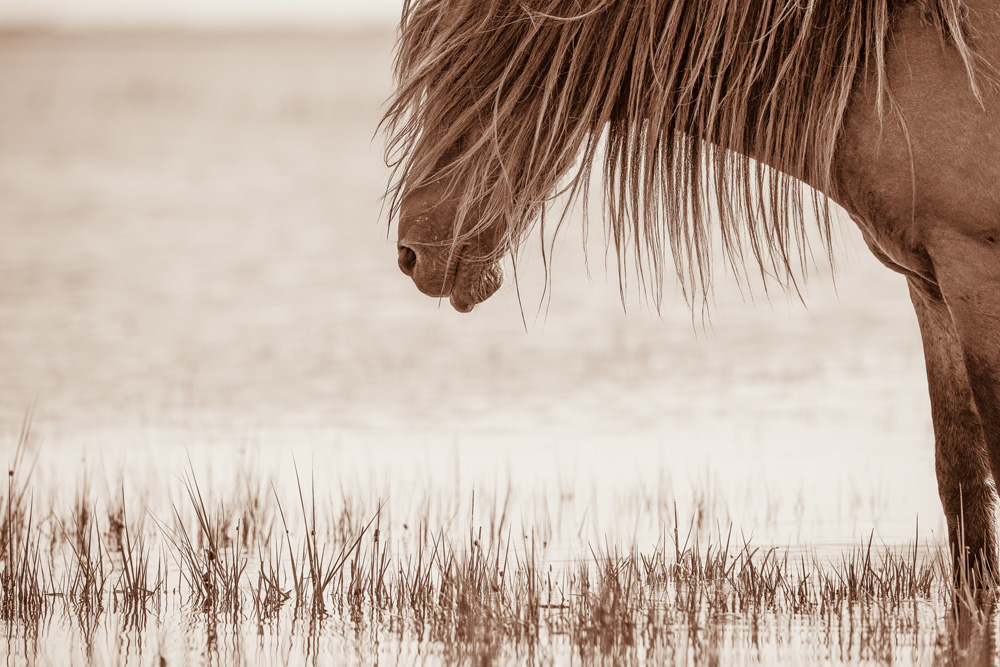 Lisa Cueman's Nap Time, Sepia Fine Art Horse Photography
