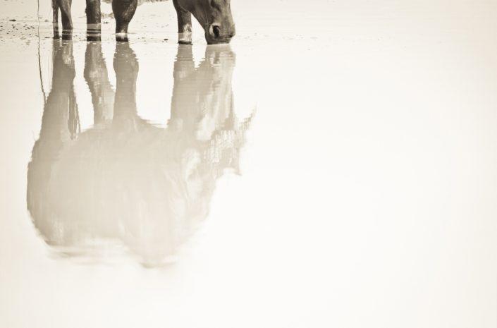 Lisa Cueman's Reflections, Sepia Fine Art Horse Photography