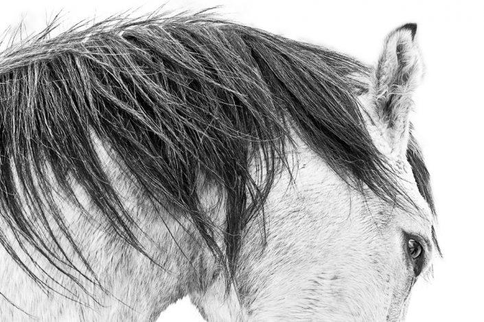 Lisa Cueman's Reva, Black and White Fine Art Horse Photography