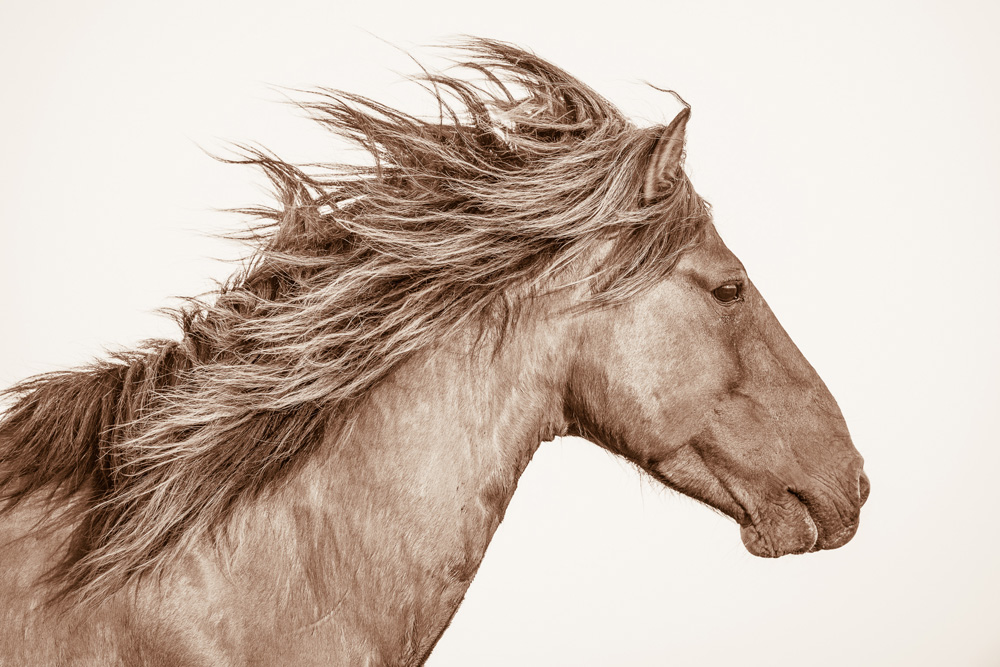 Lisa Cueman's Sea Breeze, Sepia Fine Art Horse Photography