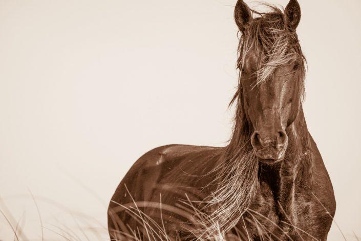 Lisa Cueman's Wavelength, Sepia Fine Art Horse Photography