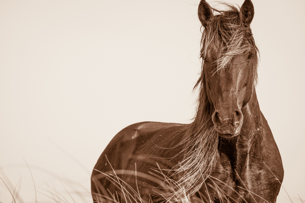 Lisa Cueman's Wavelength, Sepia Fine Art Horse Photography