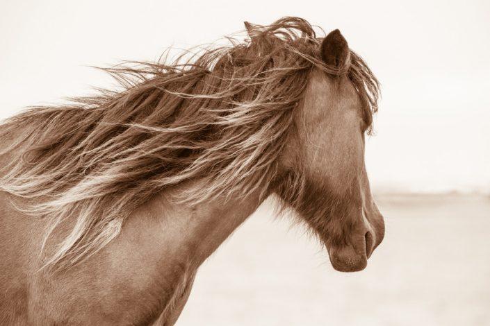 Lisa Cueman's Island Breeze, Sepia Fine Art Horse Photography