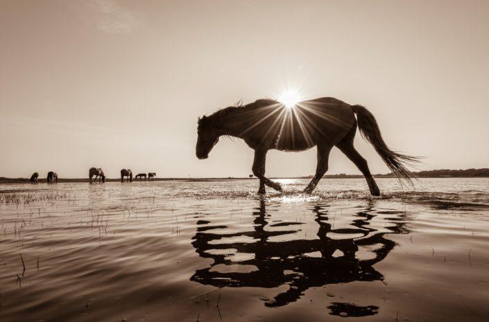 Lisa Cueman's Sunkissed, Sepia Fine Art Horse Photography
