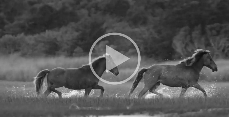Outer Banks Wild Horses Video w/Lisa Cueman