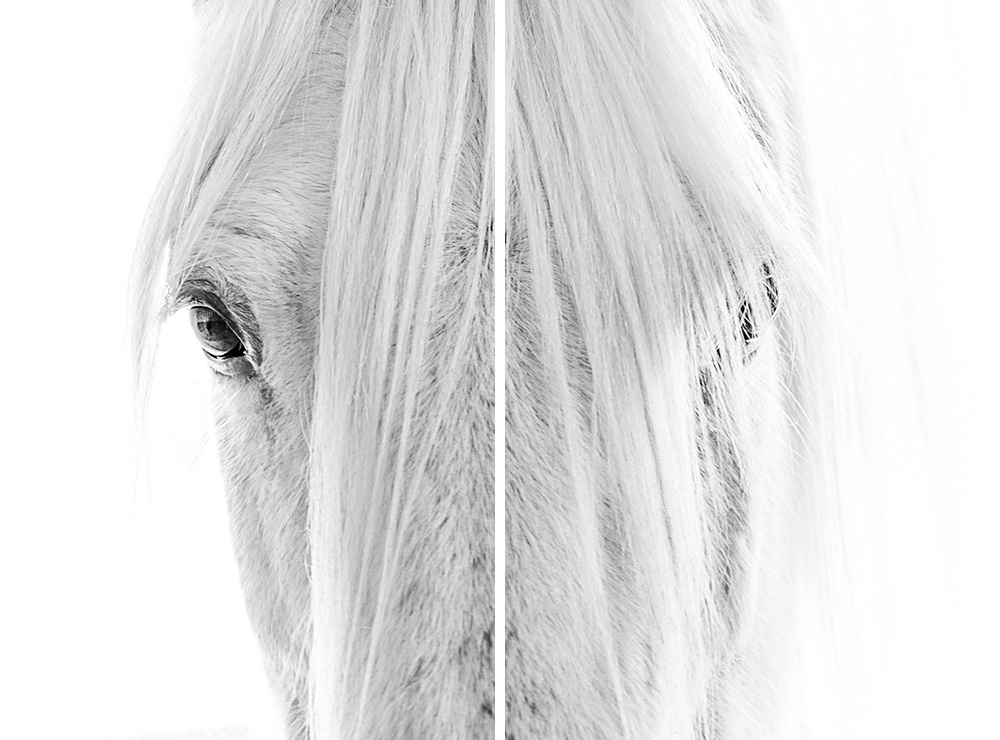 Lisa Cueman's Eye to Eye Panels, Black and White Fine Art Horse Photography