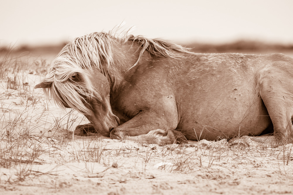 Lisa Cueman's Dreamland, Sepia Fine Art Horse Photography