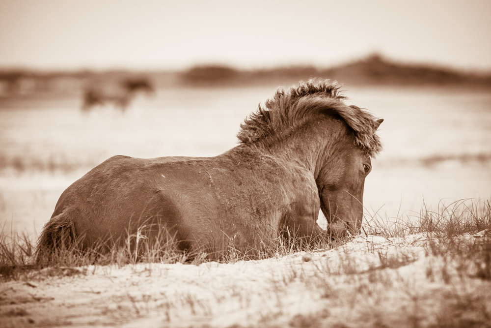 Lisa Cueman's Quiet Time, Sepia Fine Art Horse Photography