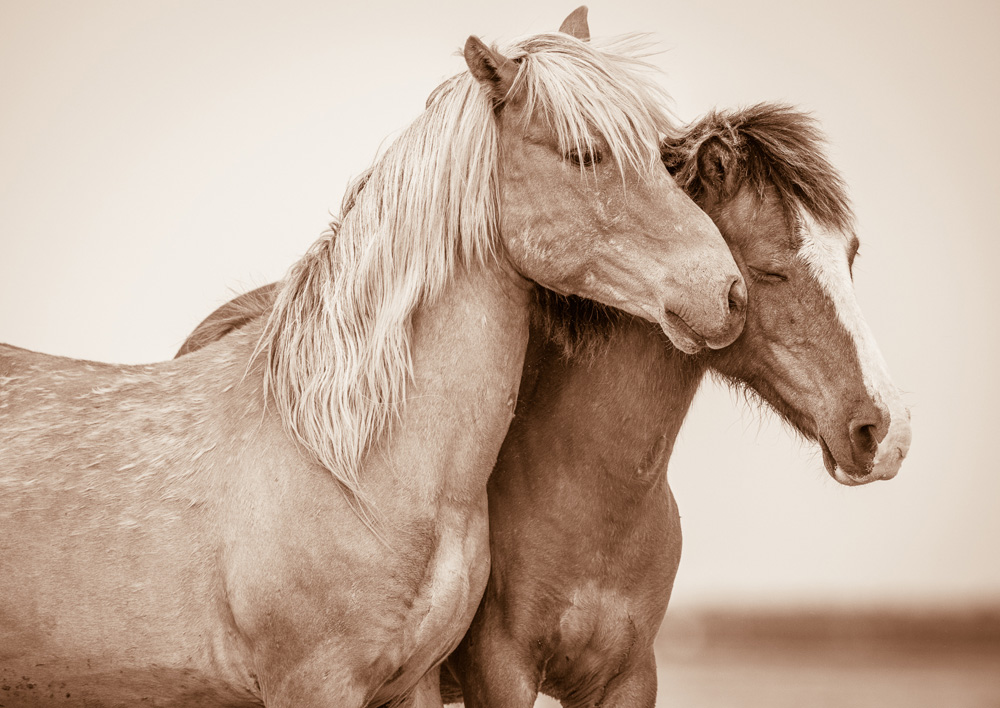 Lisa Cueman's The Nuzzle, Sepia Fine Art Horse Photography