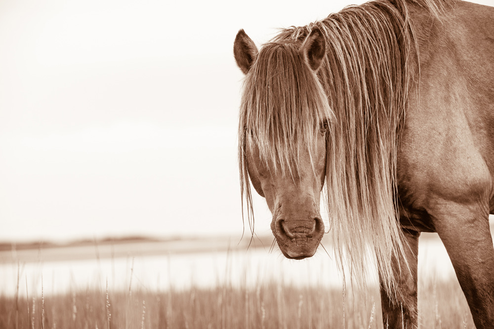 Lisa Cueman's Wild Man, Sepia Fine Art Horse Photography