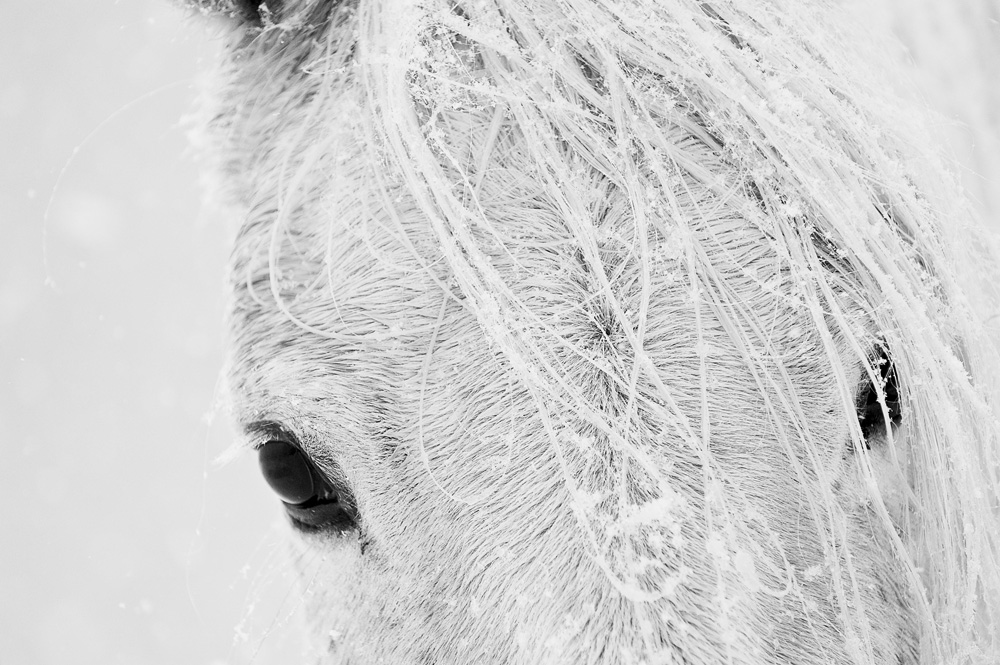 Lisa Cueman's Black Eyes, Black and White Fine Art Horse Photography