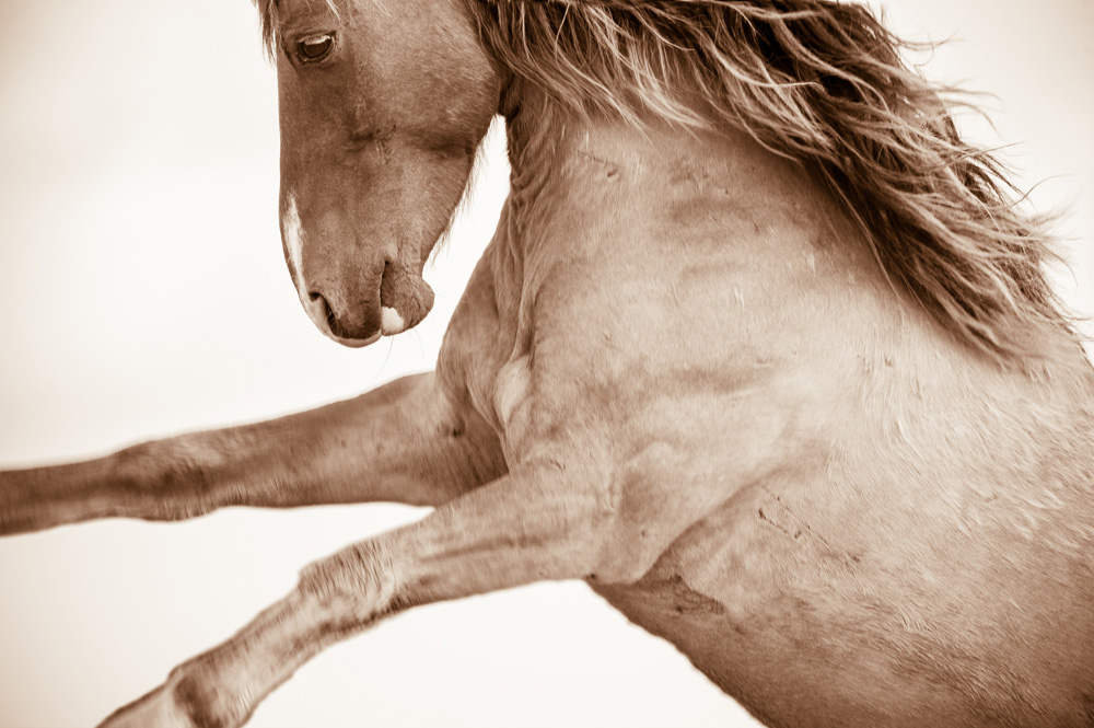 Lisa Cueman's Windswept, Sepia Fine Art Horse Photography