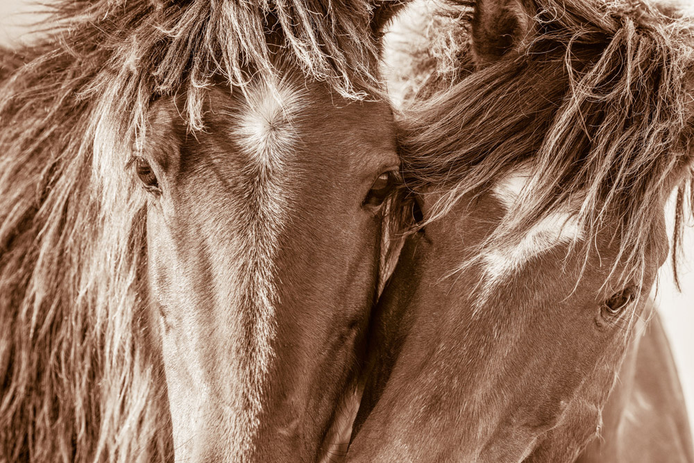 Lisa Cueman's Butterfly Kisses, Sepia Fine Art Horse Photography