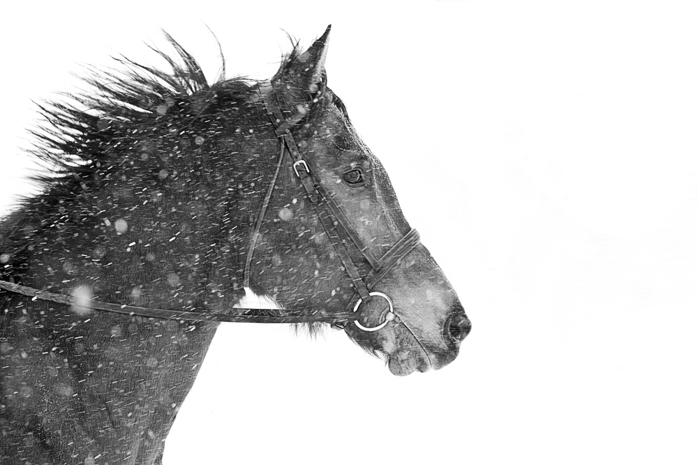 Lisa Cueman's Dashing, Black and White Fine Art Horse Photography