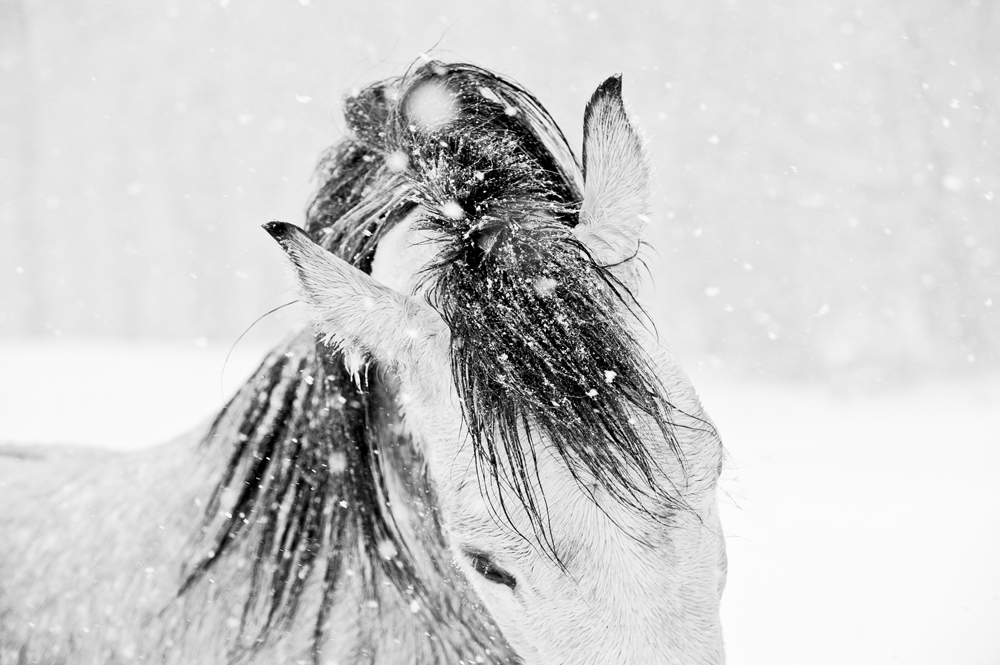 Lisa Cueman's Snow Dance, Black and White Fine Art Horse Photography