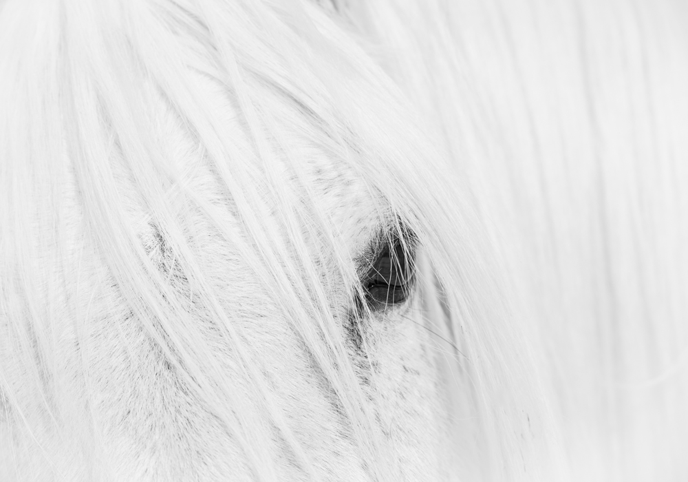Lisa Cueman's Solo Watch, Black and White Fine Art Horse Photography