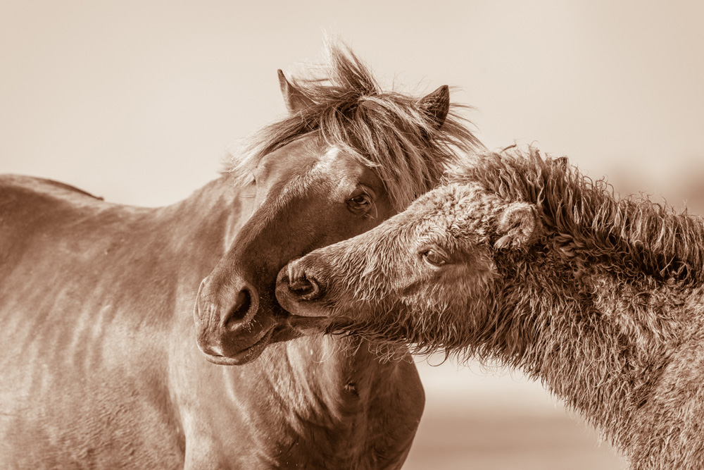 Lisa Cueman's Tenderness, Sepia Fine Art Horse Photography