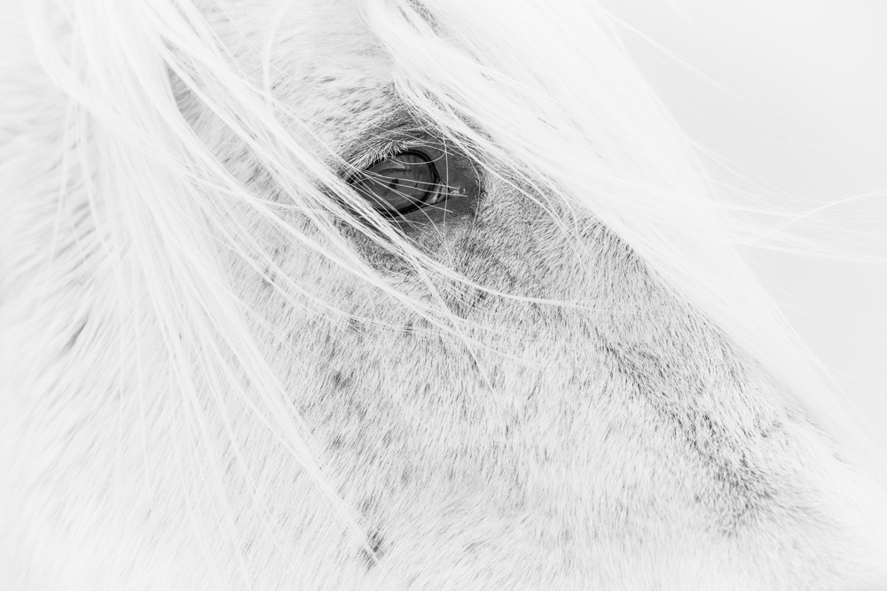 Lisa Cueman's Wishful, Black and White Fine Art Horse Photography