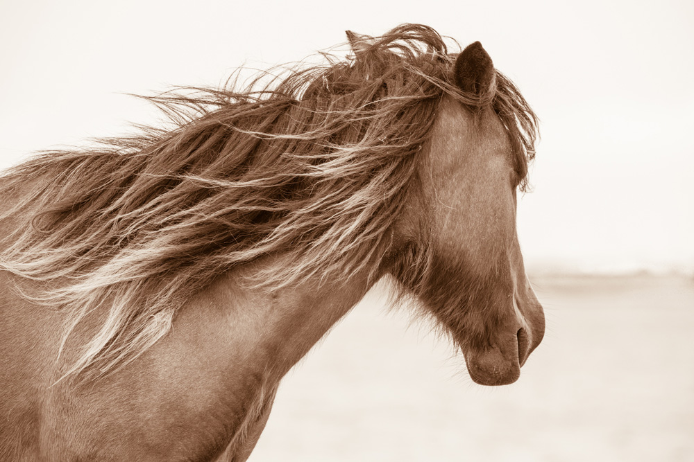 Lisa Cueman's Island Breeze, Sepia Fine Art Horse Photography