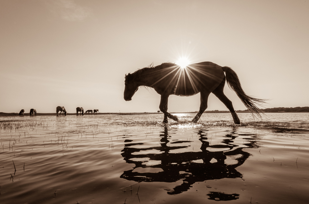 Lisa Cueman's Sunkissed, Sepia Fine Art Horse Photography